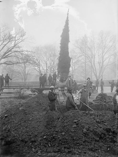 Community Christmas tree being planted in 1924